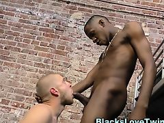 Stud sucks black schlong